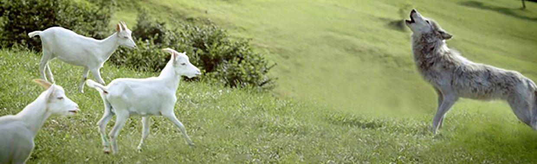 Saint Loup : recettes, bon de réduction et nouveautés