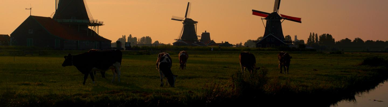 Holland Master : recettes, bon de réduction et nouveautés