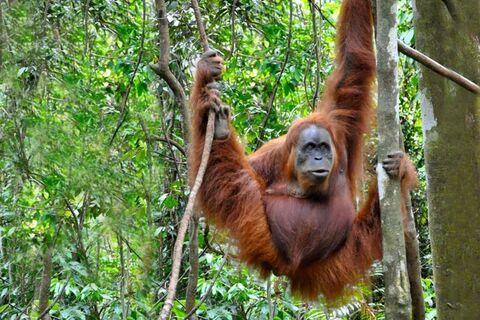 Sumatra Jungle Trek