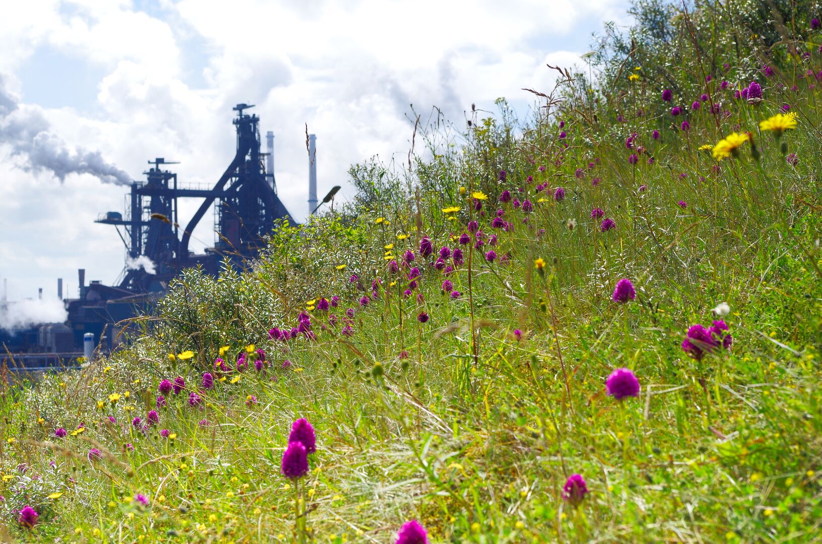 Tata Steel IJmuiden blast furnace with nature landscape