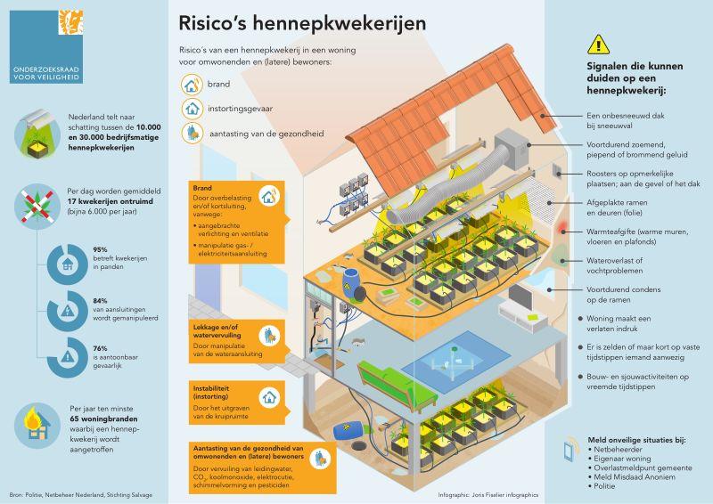 Infographic Risico's hennepkwekerijen