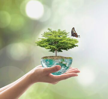 Illustrasjon av et tre med en sommerfugl