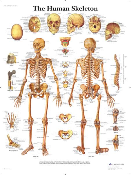 4006651_1001468_VR1113 Skelett_E_print.pdf