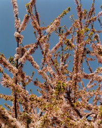Blossoms Documentary