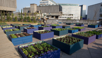 View of the Queen Elizabeth Hall Roof Garden at the Southbank Centre