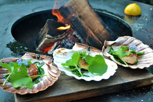 Cooked Oysters in their shells